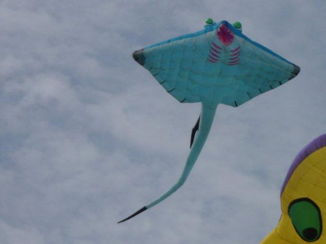Ray Smooth Tail Pasir Gudang 2013