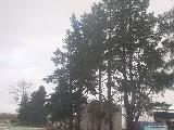 Trees on death row